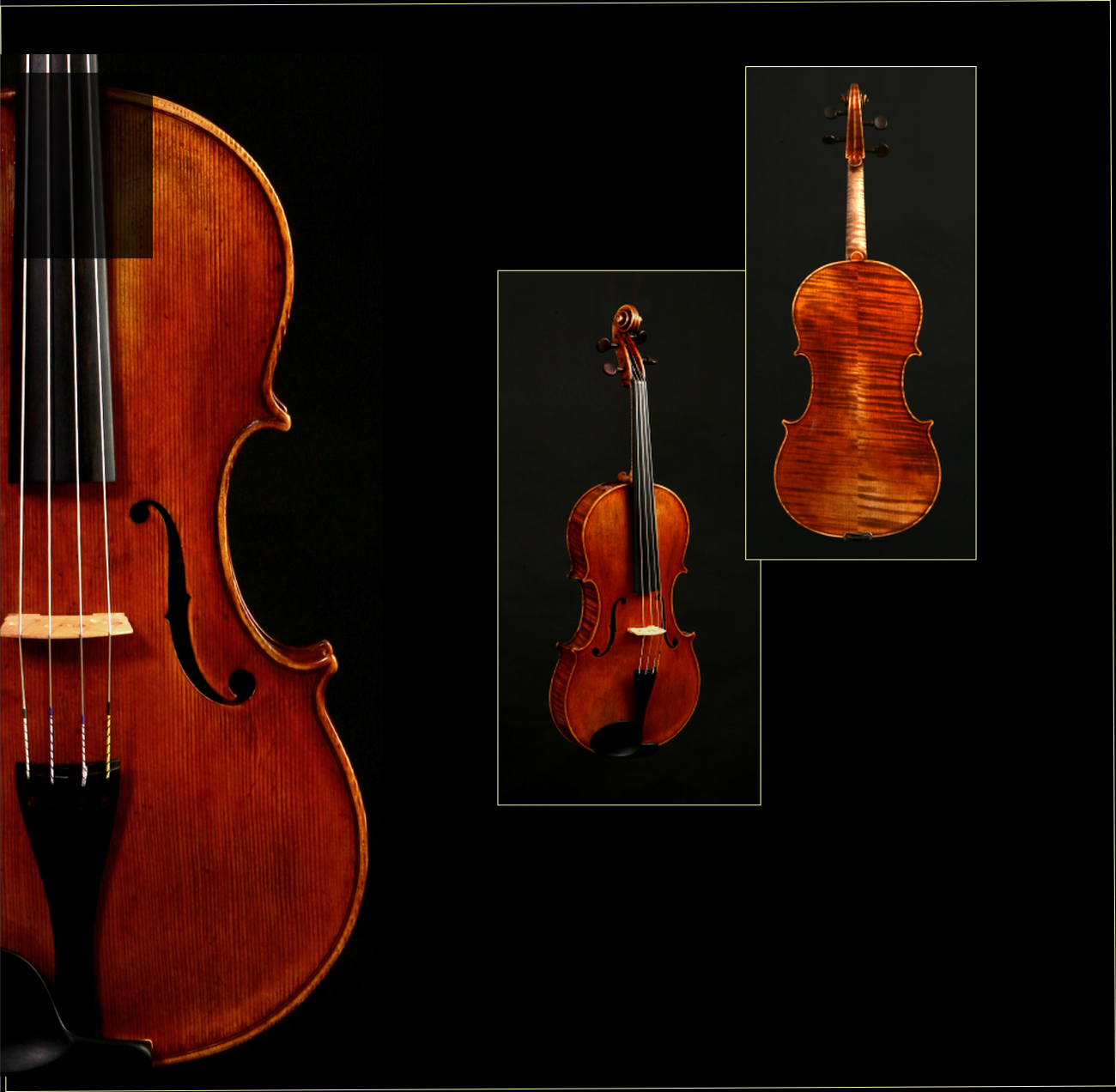 Featured Viola: 